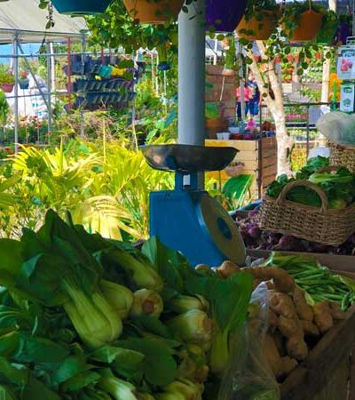 Pick and Pay Vegetable Maze by Girasoles Farm